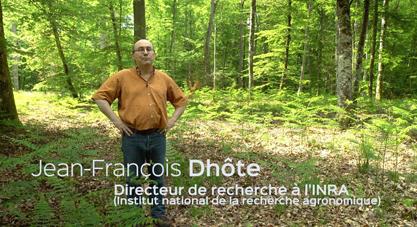 Papier et forêt française